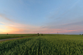 A green wheat field goes over the horizon. Shot at sunset. Place for logo - PhotoDune Item for Sale