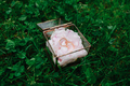 Wedding rings in a vintage glass box on a peony pillow. The box lies on the green grass. - PhotoDune Item for Sale