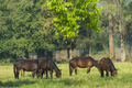 Group of three young horses on the pasture - PhotoDune Item for Sale