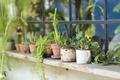 green cactus - PhotoDune Item for Sale
