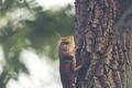 chameleon on the tree, vintage filter image - PhotoDune Item for Sale