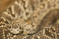 Close-up of a snake in Costa Rica - PhotoDune Item for Sale