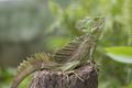 Iguana in terrarium sitting on a branch - PhotoDune Item for Sale