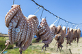 Sun dried Octopus , traditional fishing in Greece - PhotoDune Item for Sale