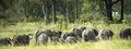 group of elephants in the bush - PhotoDune Item for Sale