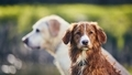 Portrait of two dogs in summer nature - PhotoDune Item for Sale