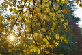 Historic Sempione park in Milan at November. Foliage - PhotoDune Item for Sale