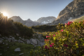 rhododendron flowers at sunrise in mountains - PhotoDune Item for Sale
