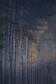sunbeam in dark coniferous forest - PhotoDune Item for Sale