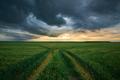 rural field landscape - PhotoDune Item for Sale