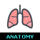 Human Anatomy Color Icon - GraphicRiver Item for Sale