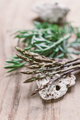 Wild asparagus and sea fennel - PhotoDune Item for Sale