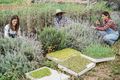 Multiracial farmer people working at greenhouse while picking up herbs - PhotoDune Item for Sale