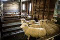 Australian Wool Shed - PhotoDune Item for Sale