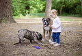 Adorable toddler girl playing with family dogs outdoors - PhotoDune Item for Sale