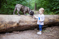 Adorable toddler girl playing with French Bulldog outdoors - PhotoDune Item for Sale