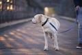 Morning walk with dog on leash - PhotoDune Item for Sale