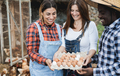 Happy farmers collecting organic eggs from henhouse - PhotoDune Item for Sale