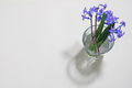 Small bouquet of blue flowers - PhotoDune Item for Sale