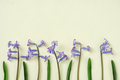 Blue flowers arranged in a row on a yellow background - PhotoDune Item for Sale