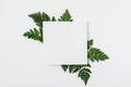 Sheet of paper with green branches - PhotoDune Item for Sale