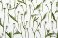 Pattern with a plant - PhotoDune Item for Sale