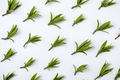 Pattern with green leaves on a white background - Minimal trendy natural concept - PhotoDune Item for Sale