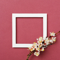 White frame and apricot branch with flowers - PhotoDune Item for Sale