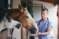Veterinarian during medical care of horses in stables - PhotoDune Item for Sale
