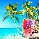 Summer Fresh Happy Tropical House