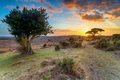 Beautiful sunset in the New Forest at Bratley View - PhotoDune Item for Sale