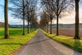 An avenue of beech trees at Moor Crichel - PhotoDune Item for Sale