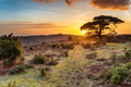 Dramatic sunset over the New Forest National Park - PhotoDune Item for Sale