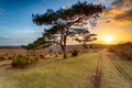 Beautiful sunset over a lone Pine tree at Bratley View - PhotoDune Item for Sale