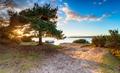 Bramble bush bay 001 - PhotoDune Item for Sale