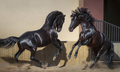 Two black Spanish horses playing together in paddock. - PhotoDune Item for Sale