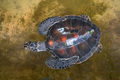 Close up of Green sea turtle or Chelonia mydas - PhotoDune Item for Sale