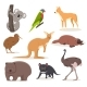 Set of Funny Cartoon Australian Animals  Emu - GraphicRiver Item for Sale