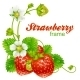 Vector strawberry frame. - GraphicRiver Item for Sale