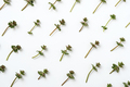 Minimal natural pattern with green plants - PhotoDune Item for Sale