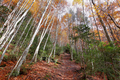 Gorgeous forest in Hecho Valley, Aragonese pyrenees, Huesca province, Spain - PhotoDune Item for Sale