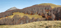 Gorgeous forest in Gamueta forest, Aragonese pyrenees, Huesca province, Spain - PhotoDune Item for Sale