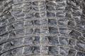 American Alligator Closeup - PhotoDune Item for Sale