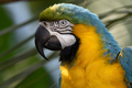 Blue and Yellow Macaw - PhotoDune Item for Sale