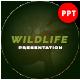 Wildlife Animal Presentation Template - GraphicRiver Item for Sale