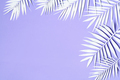 White palm leaves decoration - PhotoDune Item for Sale