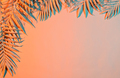 Pastel colored palm leaves - PhotoDune Item for Sale