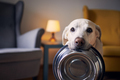 Hungry dog with sad eyes is waiting for feeding at home - PhotoDune Item for Sale