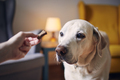 Dog watching treat from his pet owner - PhotoDune Item for Sale