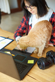 Creative female photographer with cute cat, using graphic drawing tablet and stylus pen - PhotoDune Item for Sale